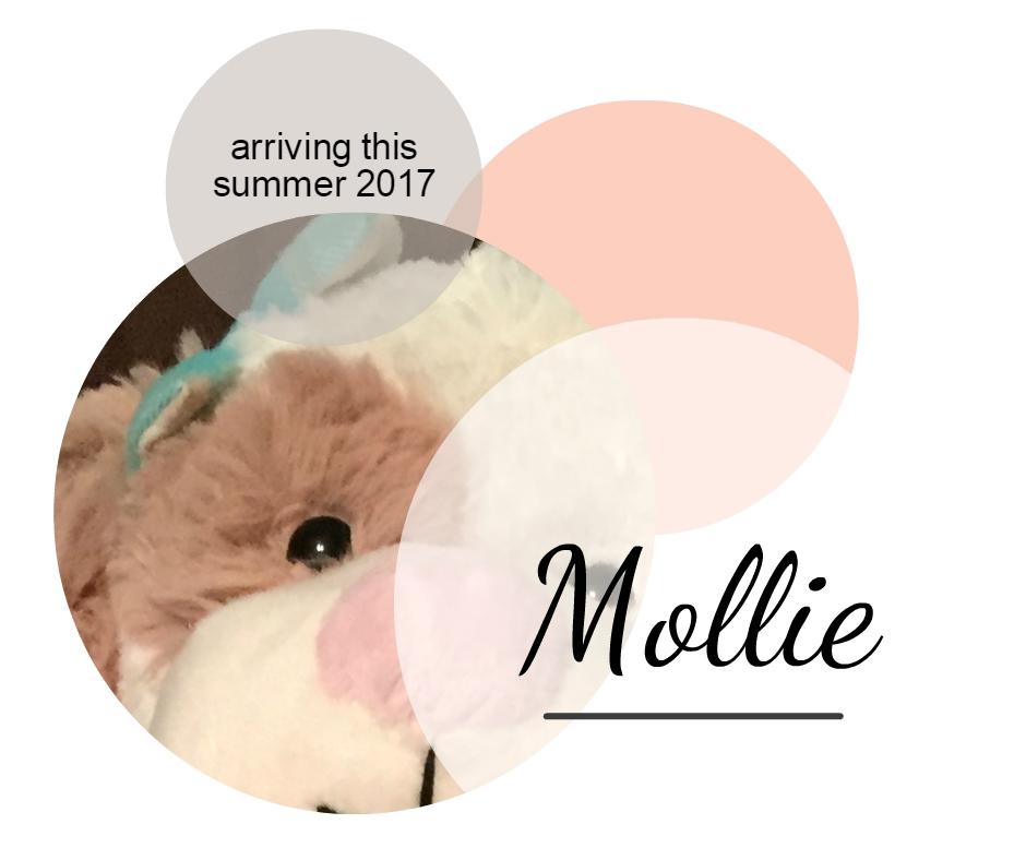 Mollie the Puppy